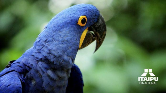 Esta asociación es el organismo regional que incluye a influyentes instituciones zoológicas de Latinoamérica, y promueve y certifica importantes programas de conservación de nuestra biodiversidad latinoamericana.